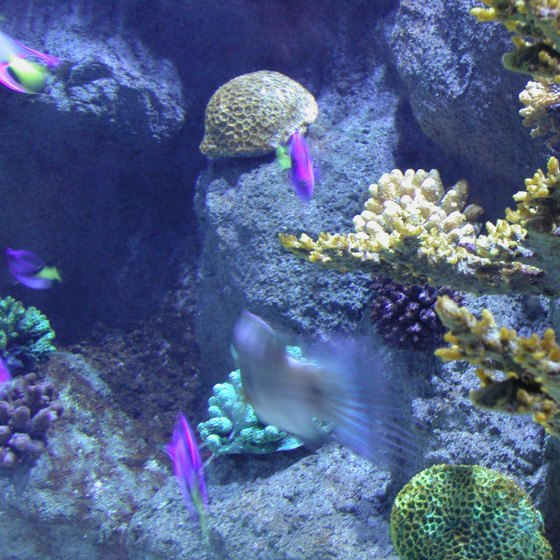 North Carolina's aquariums are situated near the state's coastline.