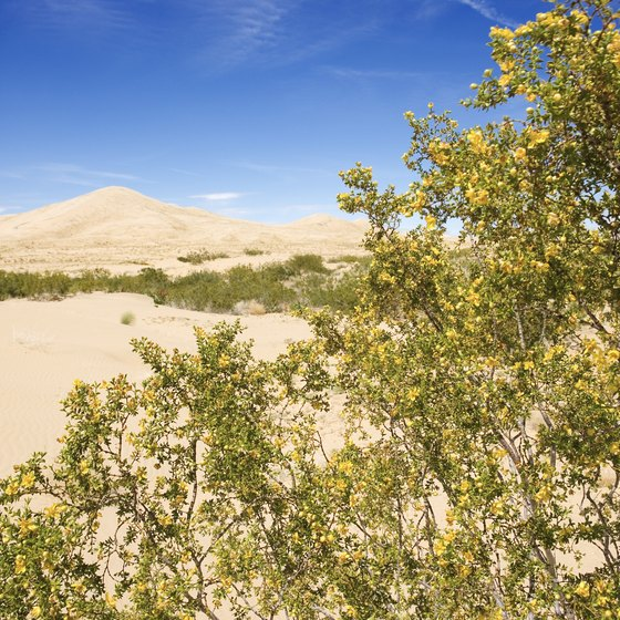 The Kelso Sand Dunes are one of the reasons to stop at the Mojave Preserve.