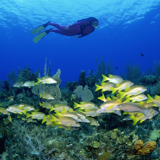 The color of Cozumel's many reefs is part of what makes the island a top diving destination.