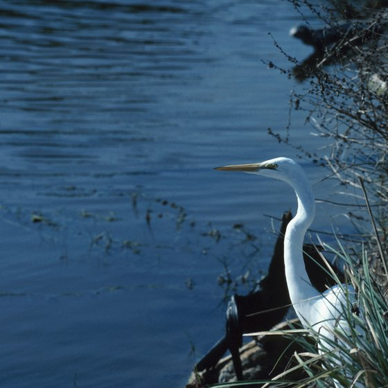 A heron looks out over Everglades National Park.