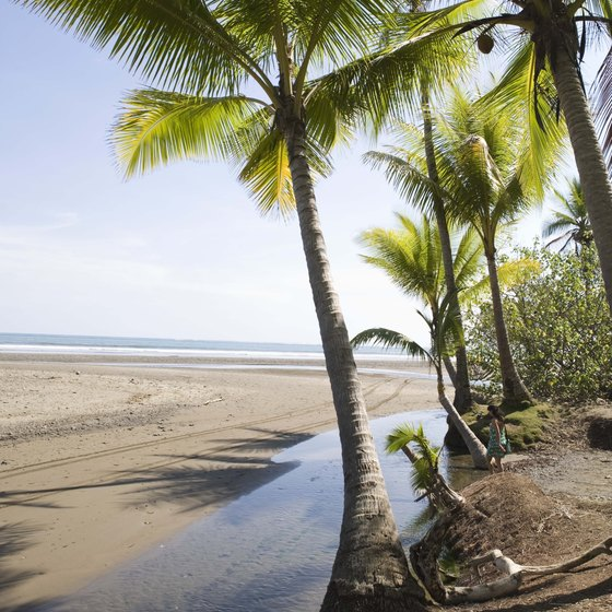 The forests, including palm and manzanita trees, come right up to the edge of the beaches in Puerto Viejo.