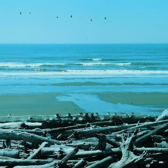 Olympic National Park has coastline, mountains and rain forests.