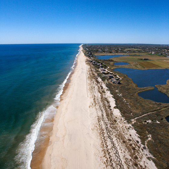 Birds found in the Hamptons include coastal species.