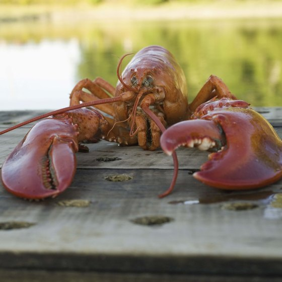 Lobster is a major part of Maine's tourism industry.