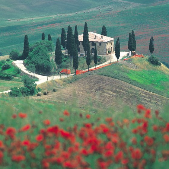 Gallop through fields of red poppies when you go horseback riding in Tuscany.