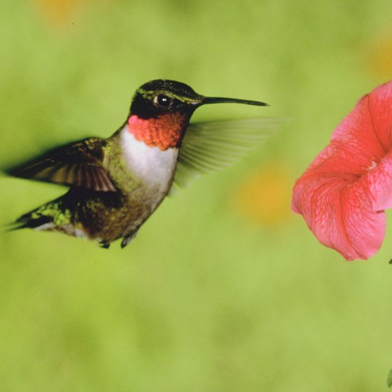The event celebrates more than 500 species of birds, including the ruby-throated hummingbird.