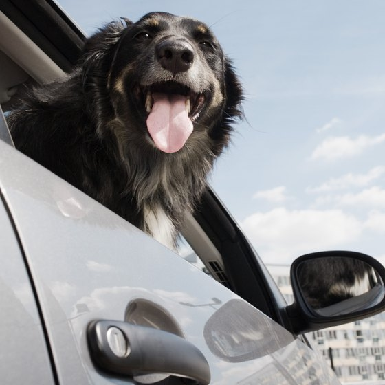 Careful planning and preparation will ensure a happy traveling dog.