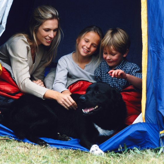 Bringing pets along family vacations don't have to be a hassle.
