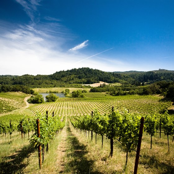 Biking through Sonoma County takes you through scenic vineyards.
