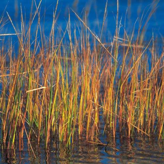 Reeds crop up in a lake in Plymouth, Massachusetts.