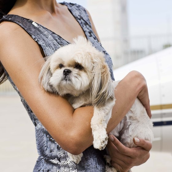 Take steps to ease the stress of international travel on your pet.