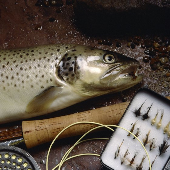Clearfield County is home to several outstanding trout streams.
