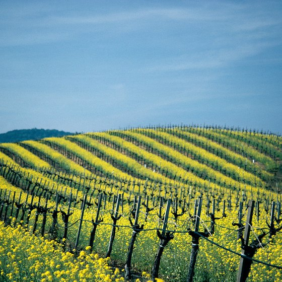 Train rides provide sweeping vistas of Northern California's famed vineyards.