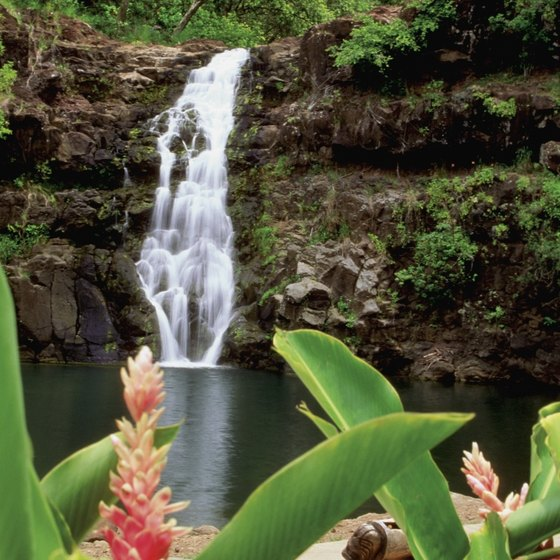 Waimea Valley is a must-see cultural and nature park on Oahu's North Shore.