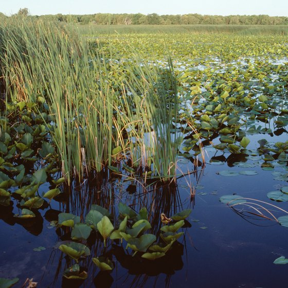 The Everglades are home to many rare species.