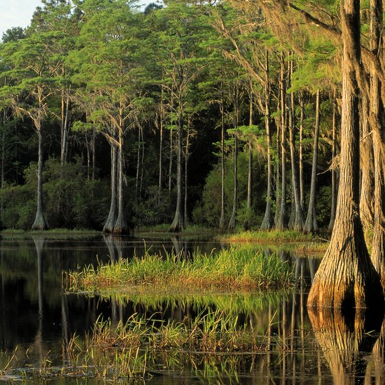 Big Cypress Swamp covers much of the Everglades.