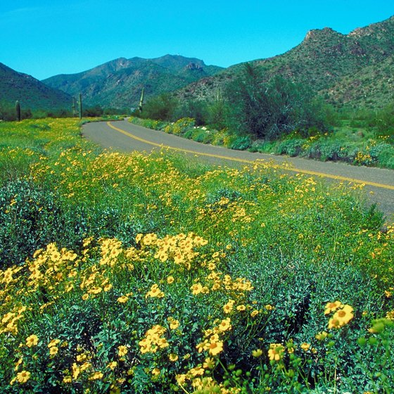 The Sonoran Desert comes alive with bloom when temperatures reach the 70s.