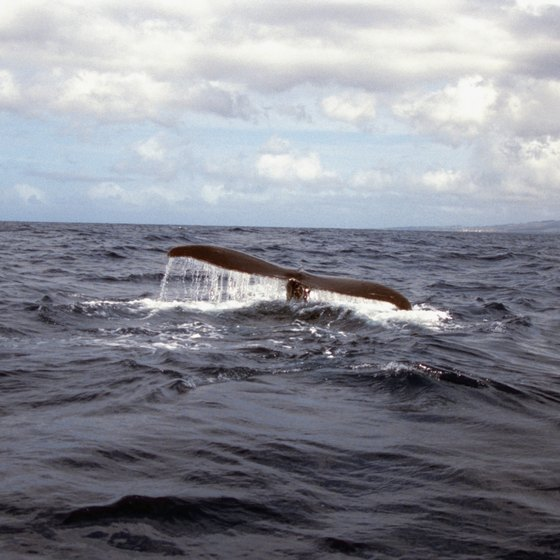 Whale-watching is among the top eco-friendly activities in Hawaii.