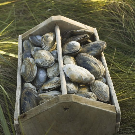 Clams are an essential part of southern Rhode Island's cuisine and can be found at most restaurants and markets.