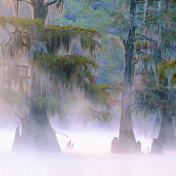 Majestic cypress trees emerge from Lake Caddo.