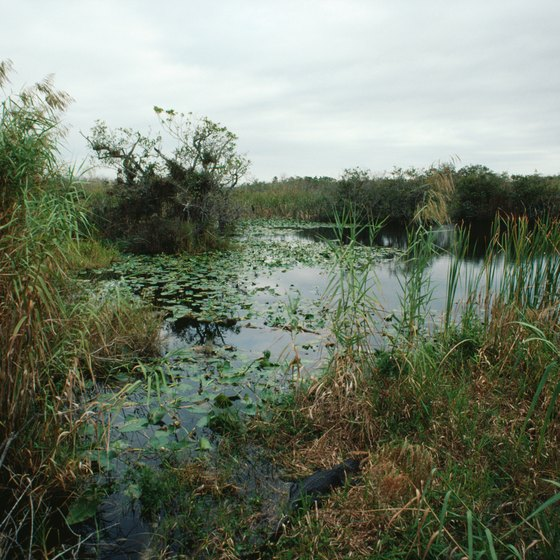 View the wetlands in Everglades National Park.
