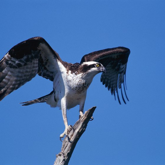 Rafters enjoy viewing osprey and other wildlife along the Rogue River.