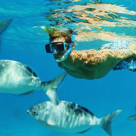 Meet the marine life while snorkeling along the Emerald Coast.