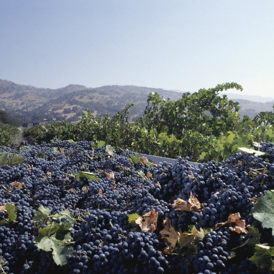 The scenic vineyards of Napa Valley's wine country make a romantic excursion for couples.