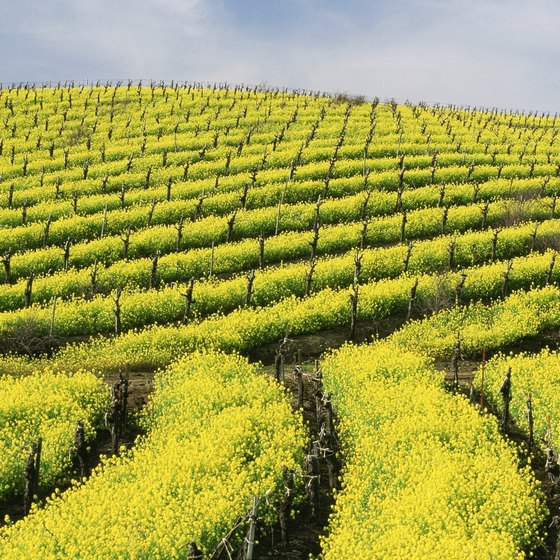 Some hotels in the Wine Country feature views of the region's famed vineyards.