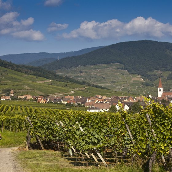A singles vacation to France can take you biking through the wine regions.