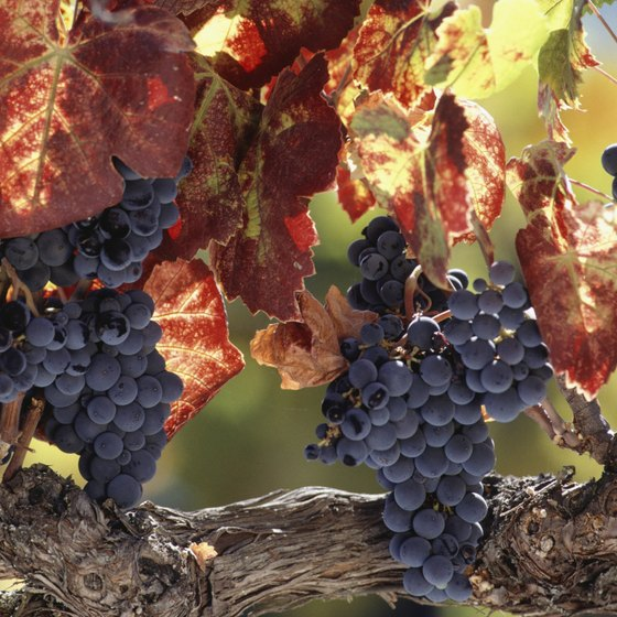 California's Napa Valley wine region is known for its cabernet varietal.