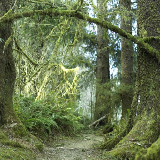 The Quinault Valley includes a rain forest.