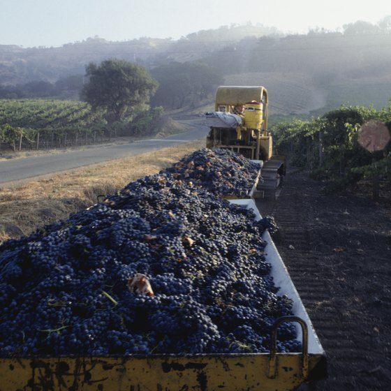 Grapes are harvested and crushed in Napa in September and October, the height of the tourist season.