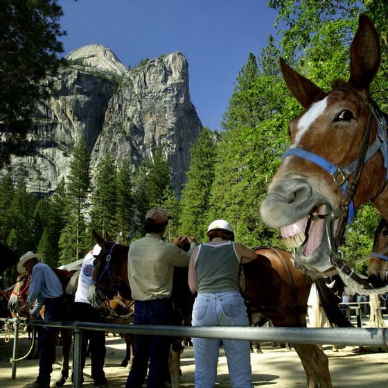 Yosemite National Park offers guided mule and horseback rides.
