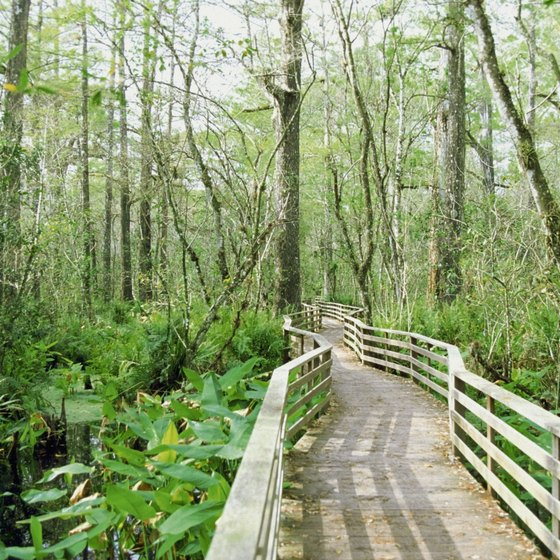 A hotel in the Golden Gate area of Naples makes a great base for exploring Corkscrew Swamp Sanctuary.