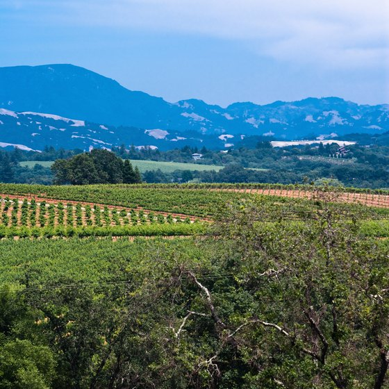 Sonoma County offers breathtaking natural beauty and a romantic ambiance.