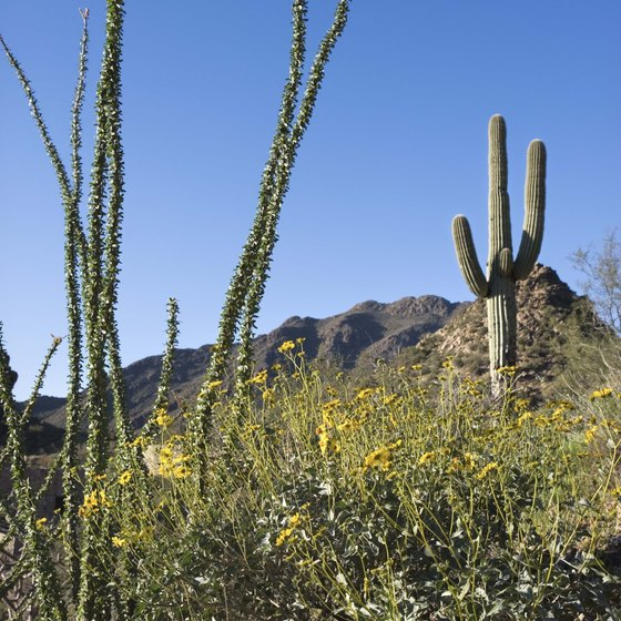 Use your Sunday to visit a national or state park in Arizona.
