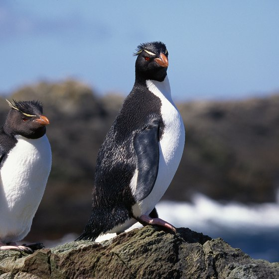 Penguins rule the roost and top the souvenir list in the Falkland Islands.