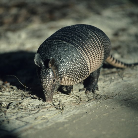 Hikers in the Chickasaw National Recreation Area beside Sulphur might see armadillos.