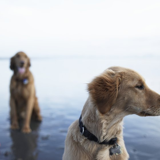 Bring along your best friends to the Oregon Coast.