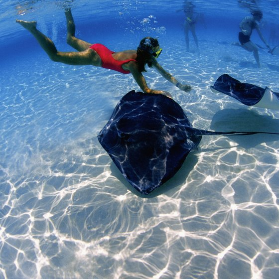 Stingray City is a renowned attraction off the coast of George Town, Grand Cayman.