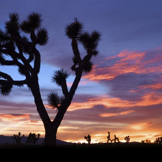 Bring your camera to capture the dramatic desert scenery.