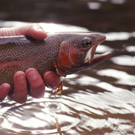 The Stanley area is known for its trout fishing.
