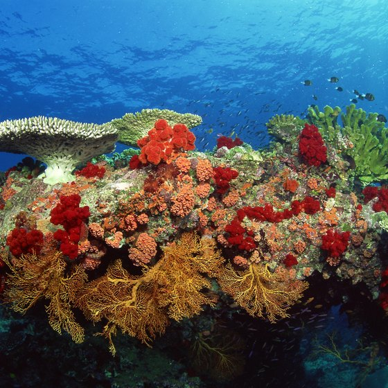 Coral reefs are some of the colorful sea life that snorkelers can see around Malaysia's islands.