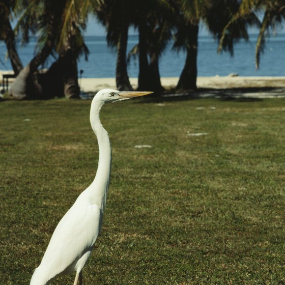 Florida's distinct wildlife and sandy beaches are a big draw for visitors.