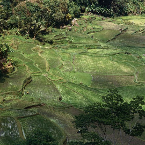 Bali's rice paddies offer day-hiking opportunites.