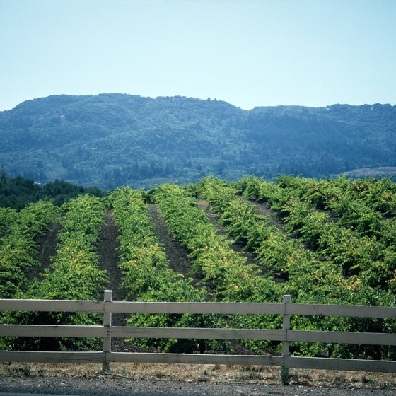 Napa Valley is famous for its vineyards.