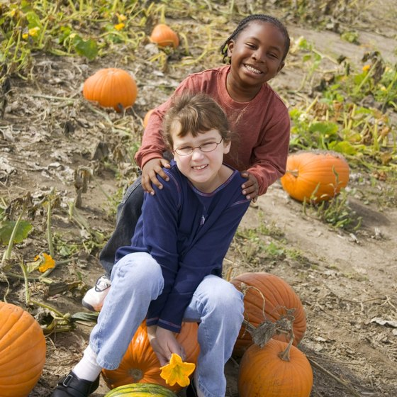 Celebrate fall at a pumpkin patch in Loveland.