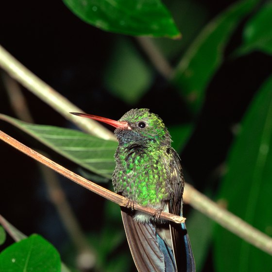 Hummingbirds and hundreds of other species can be found in this subtropical area.