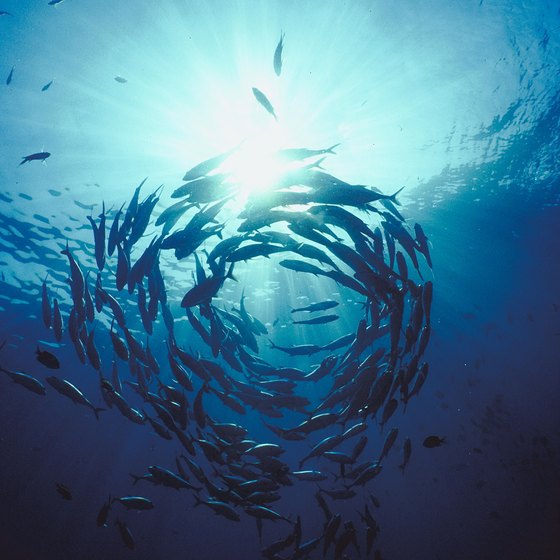 The abundance of fish in the waters off Los Cabos draws anglers from around the world.